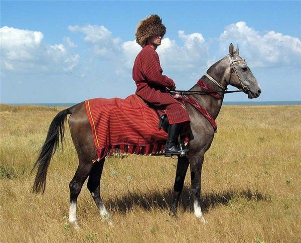 """Argamaks lub """"niebiańskie"""" koni z Turkmenistanem - zapoznanie się z ahaltikinskoy rasy"""