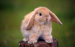 Co jeśli biegunka królika: przyczyny i leczenie