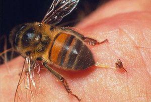 ugryzienie owada