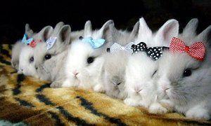 Co ras królików jeść, a czego nie powinien próbować?