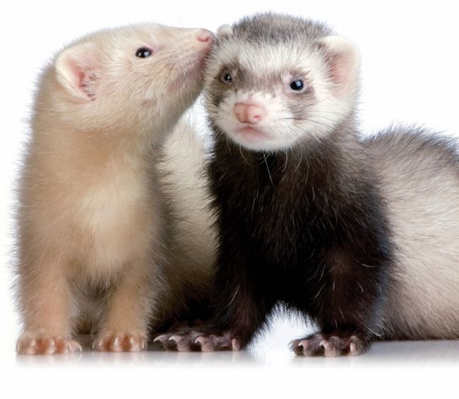 Dwa słodkie zwierzę inny kolor
