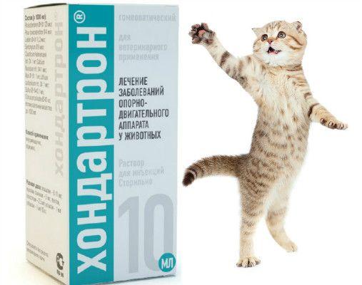 Hondartron dla kotów: działanie i szczególnie lek