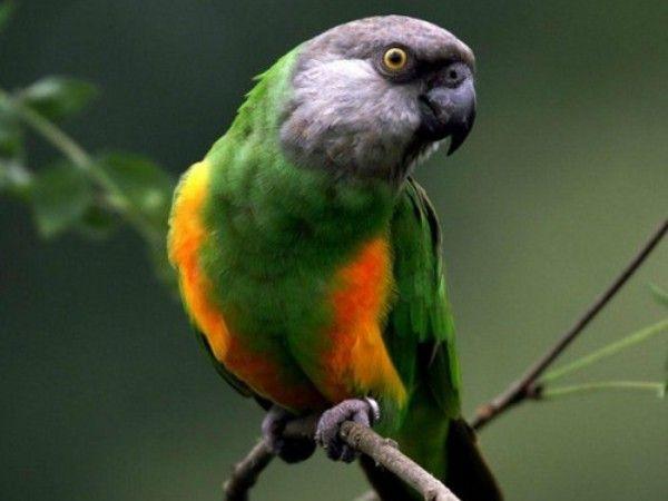 Bright-ptactwa cud: wszyscy różnych ras papug