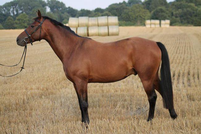 Jako nazwa konia, więc on będzie skakać