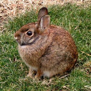 Jak pięknie nazywa rabbit-girl