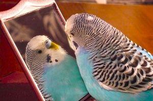 Jak uczyć papugi i jak lepiej nazwać papugę chłopca