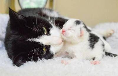 Jak pomóc kotu podczas porodu i nie szkodzić?