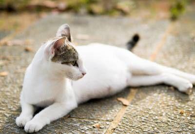Jak pomóc kot w rui