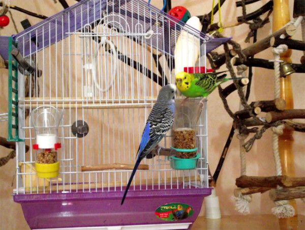 Co komórka potrzebuje nimfy i papużki?