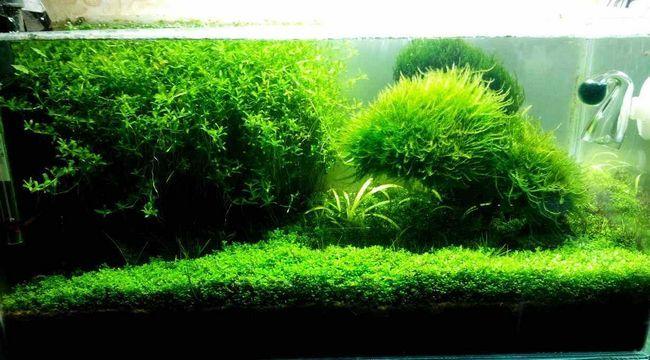 Zbiornik kwarantanny i izolacji ryb