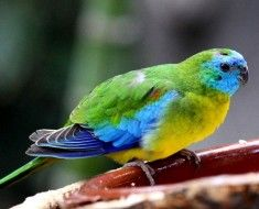 Zdjęcie 3. Azure papuga