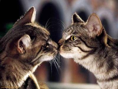 Antykoncepcja dla kotów