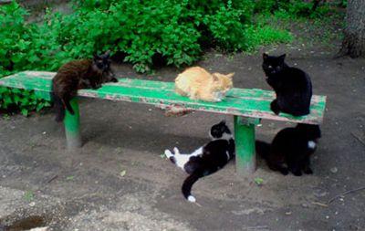 Feline spotkania