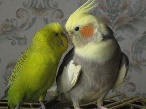 Kim są i jak ptak ptaki te żyją w domu?
