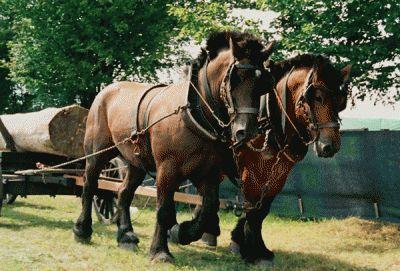 Konie są różne - krótkie wszystkich ras