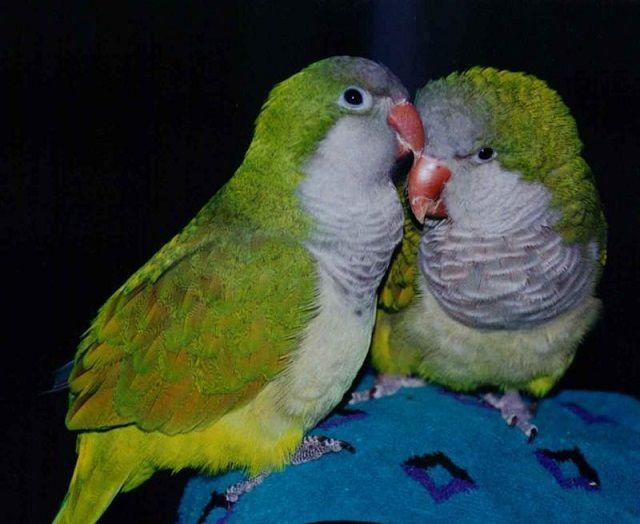 Najlepsze twórcze i piękne nazwy dla papug