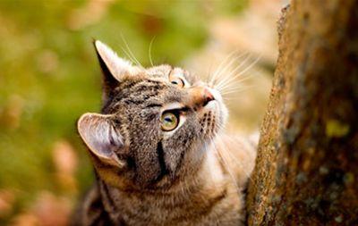 Dlaczego koty domowe polować?