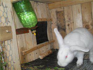 Pijący dla królików z rękami