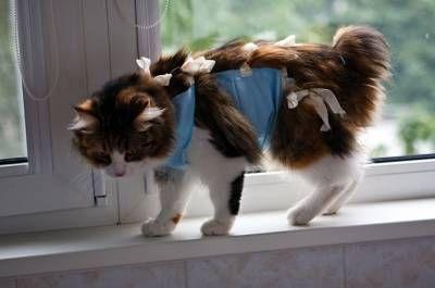 Koc dla kota: szczegółowa instrukcja, jak uszyć strój i