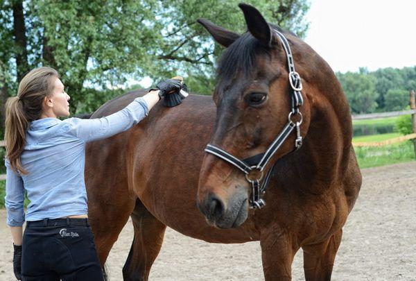 Właściwa pielęgnacja konia i jego kopyt