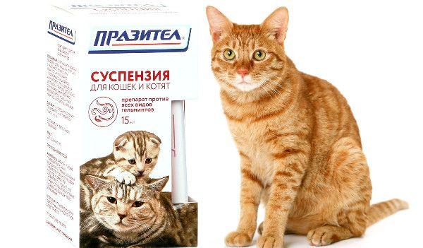 Prazitel dla kotów i kociąt: cel, dawkowanie