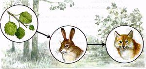 Przykłady układów napędowych w różnych lasach