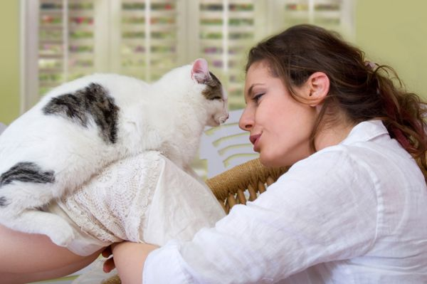 Objawy ciąży u kotów - z kryciem do pierwszych kilku tygodni