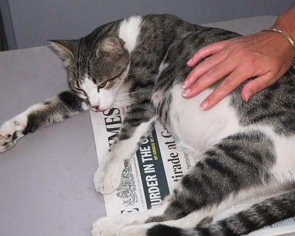 Objawy porodu u kotów. Powiemy Ci, jak nie przegapić moment