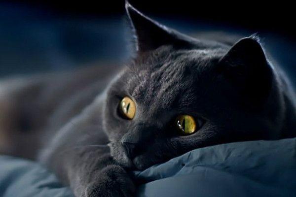 Impuls z kotami: podstawowe informacje i metody pomiaru