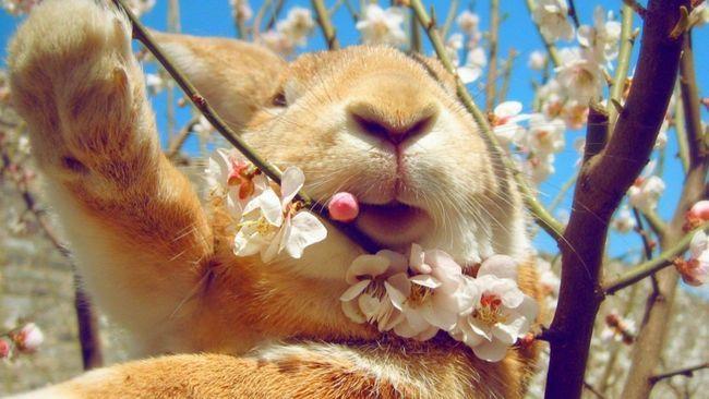 Dekoracyjne królik dieta: wszystko od A do Z