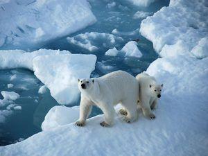 Rośliny i zwierzęta pustynne arktyczny