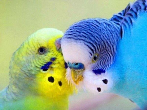 Najlepiej najbardziej wśród papug