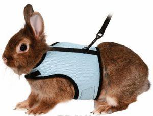 Uprząż dla królików - jak wybrać i przeszkolić zwierzaka