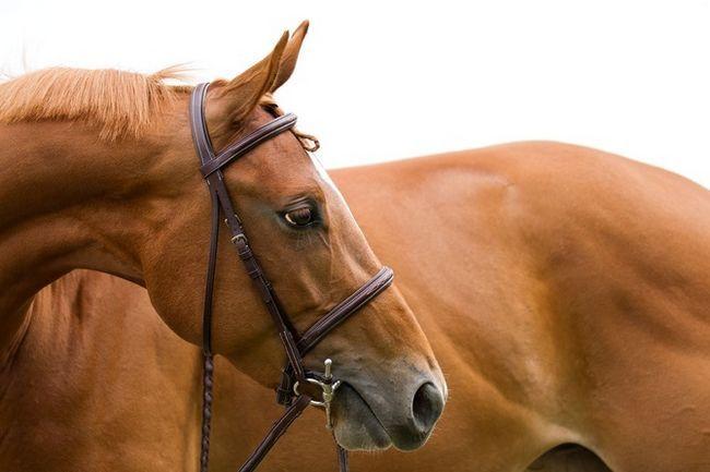 Zarządzanie koń: ABC początkujący jeździec