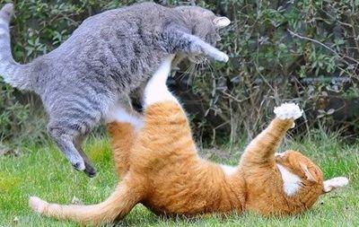 Terytorium kota i zachowań w kontaktach z innymi kotami