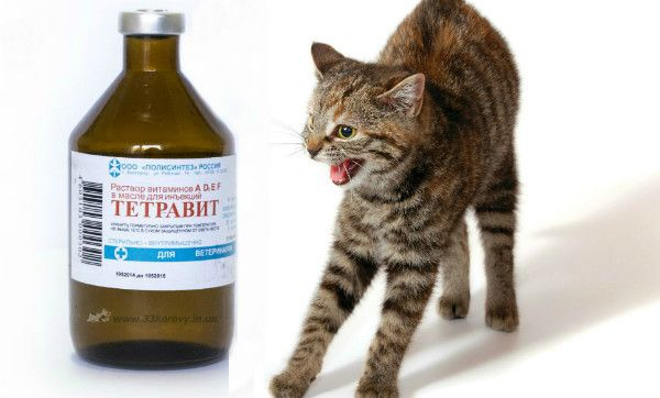 Tetravit dla kotów: przegląd leku