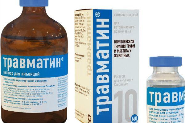 Travmatin dla kotów - wszystkie najważniejsze informacje o leku