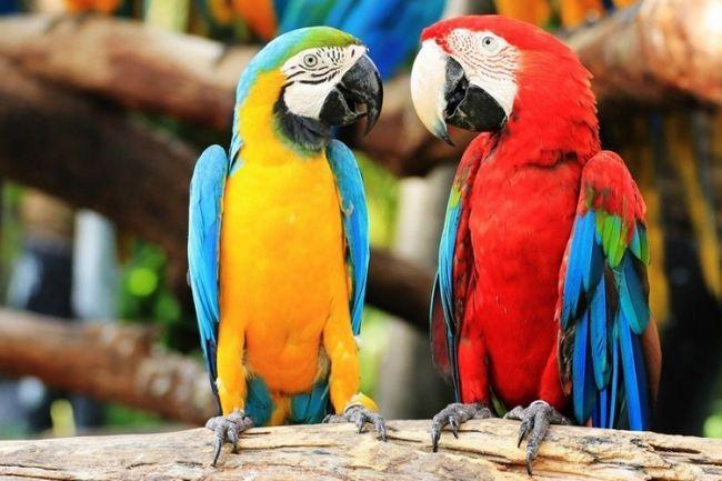 Konfigurowanie taniec Parrot - doskonałą muzykę dla ptaków