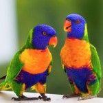 Zabawa i fantazyjne papugi