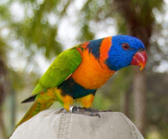 Wielokolorowe papuga siedzi