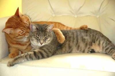 Wiążąc koty: wszystko, co musisz wiedzieć