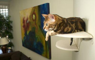 własność kot