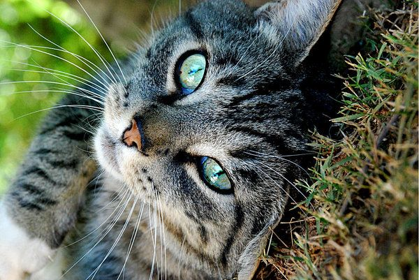 Przydział ciąży kota. Jak rozpoznać zagrożenie