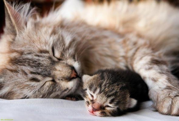 Wybór kota po urodzeniu. Raspoznaom niebezpieczeństwo