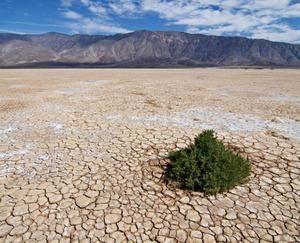 Hardy rośliny i ciekawe zwierzęta z pustyni