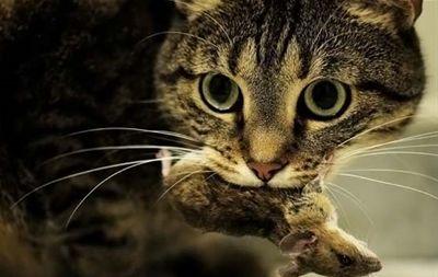 Dla kotów, które polują?