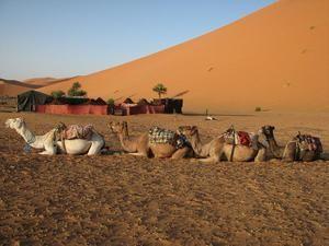 pustynne zwierzęta