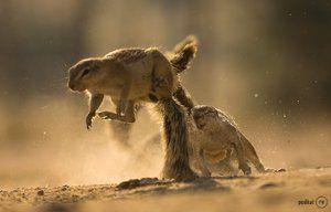 Zwierzęta pustynie i półpustynie